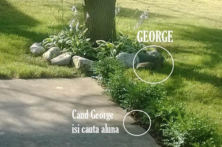 George-cauta-alune