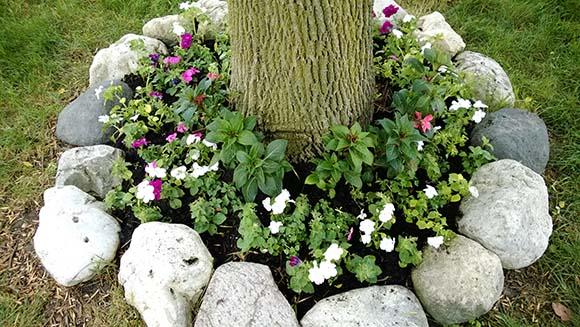 baza-copac-flori