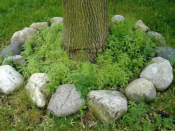 copac-buruieni