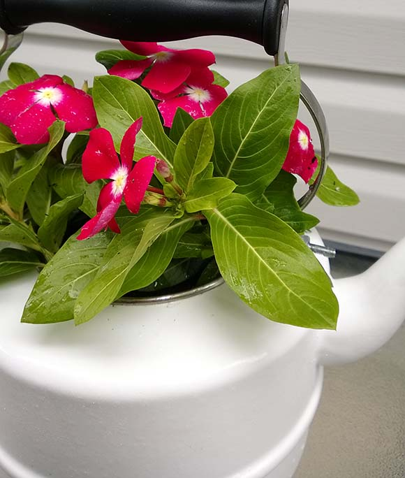 flori-in-ceainic