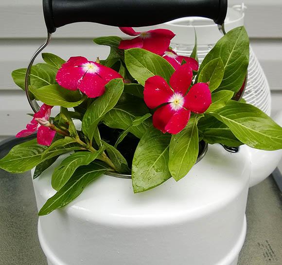 flori-roz-ceainic
