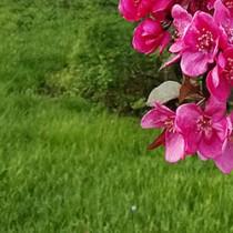 flori-si-iarba-f