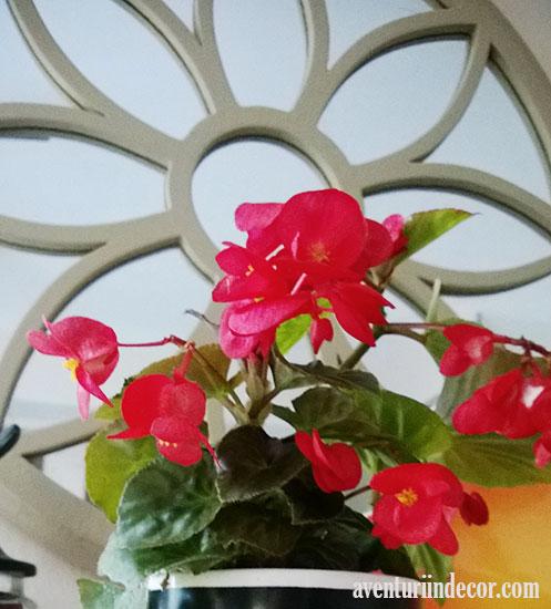 oglinda-in-forma-de-floare