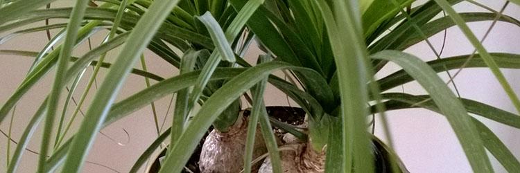 plante-f